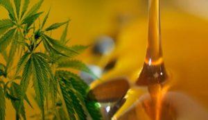 aceite de cannabis propiedades