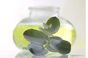 aceite de eucalipto para el pelo