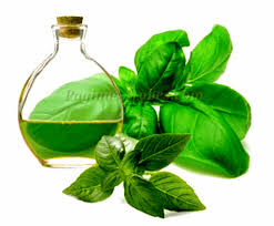 aceite de albahaca propiedades